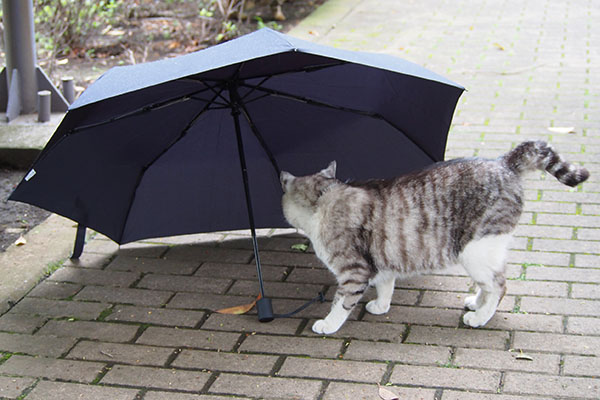 傘に接近 クロム