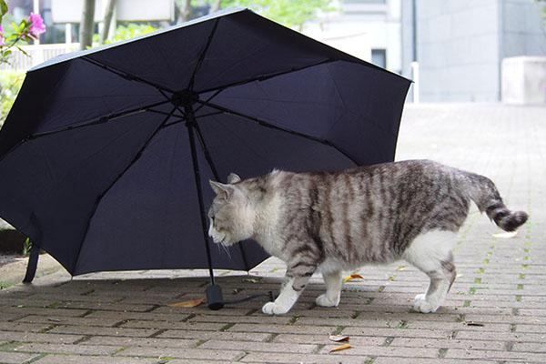 傘に接近 クロム2