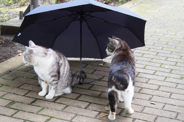 クロムとタンタルと傘