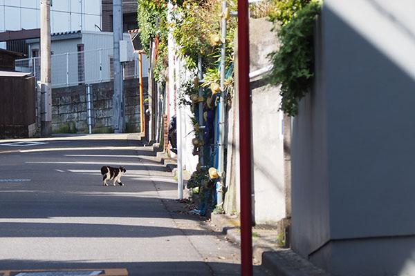 道路を歩く カル