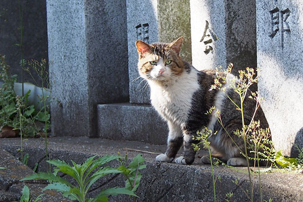 レオ太 参道脇 日差し顔