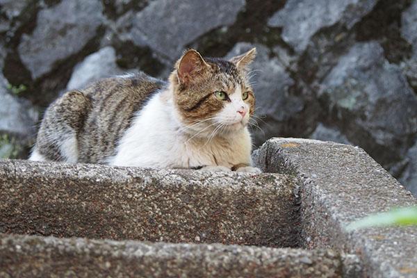 レオ太 猫ボラさんを待つ
