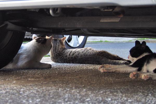 さくらの子供達が車の下からさくらを見ていた