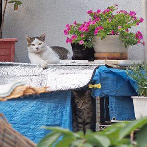 3cats kochu monota shimawo