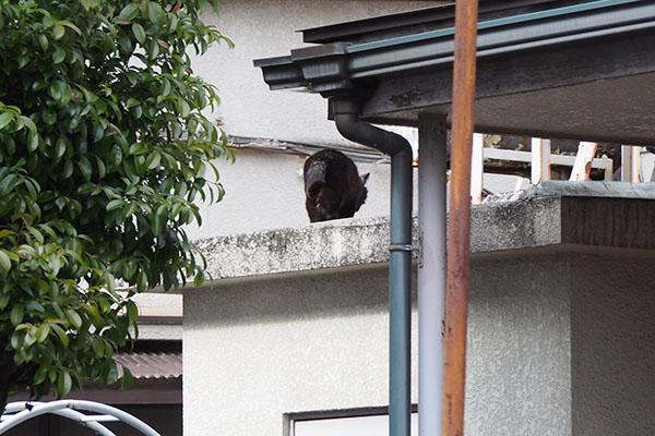 高い場所に黒猫さん オブシ