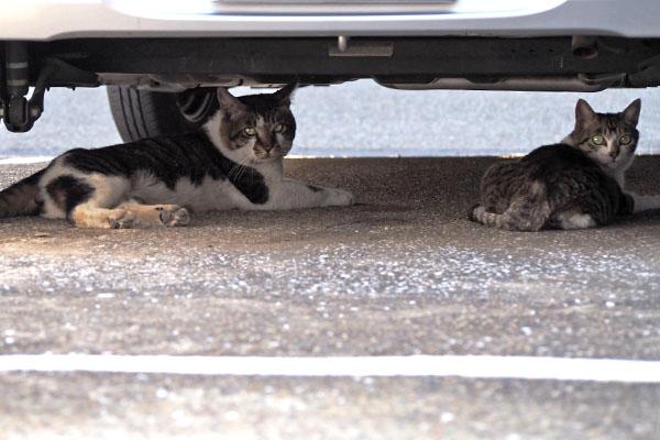 オンブレ 車の下 さくらと並ぶ