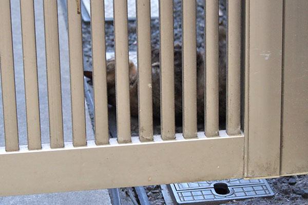 柵の向こう側に猫さん