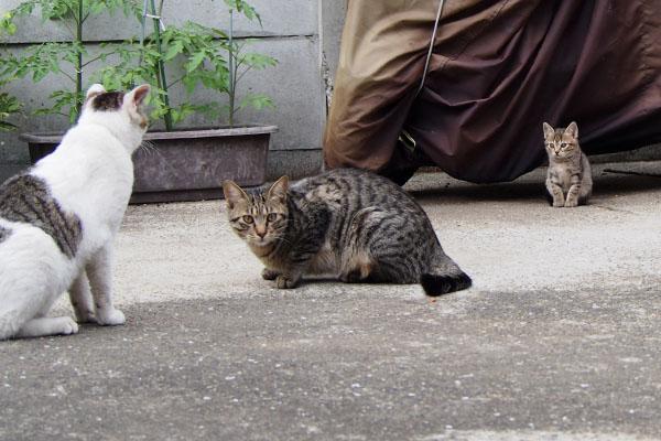 仔猫を気にするコチュ