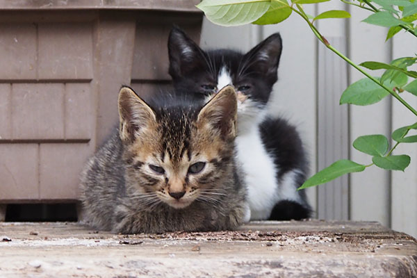 仔猫ズ 2匹 じっとして