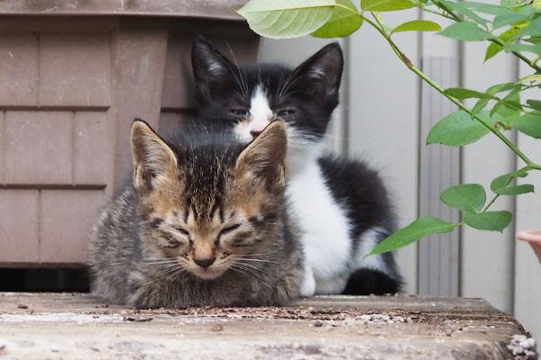 残りの仔猫ず 2匹