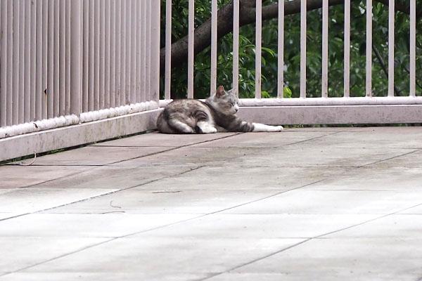 クロム 階段を見ている