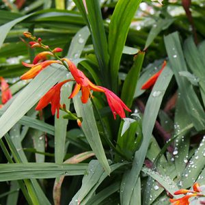 flower and rain orange