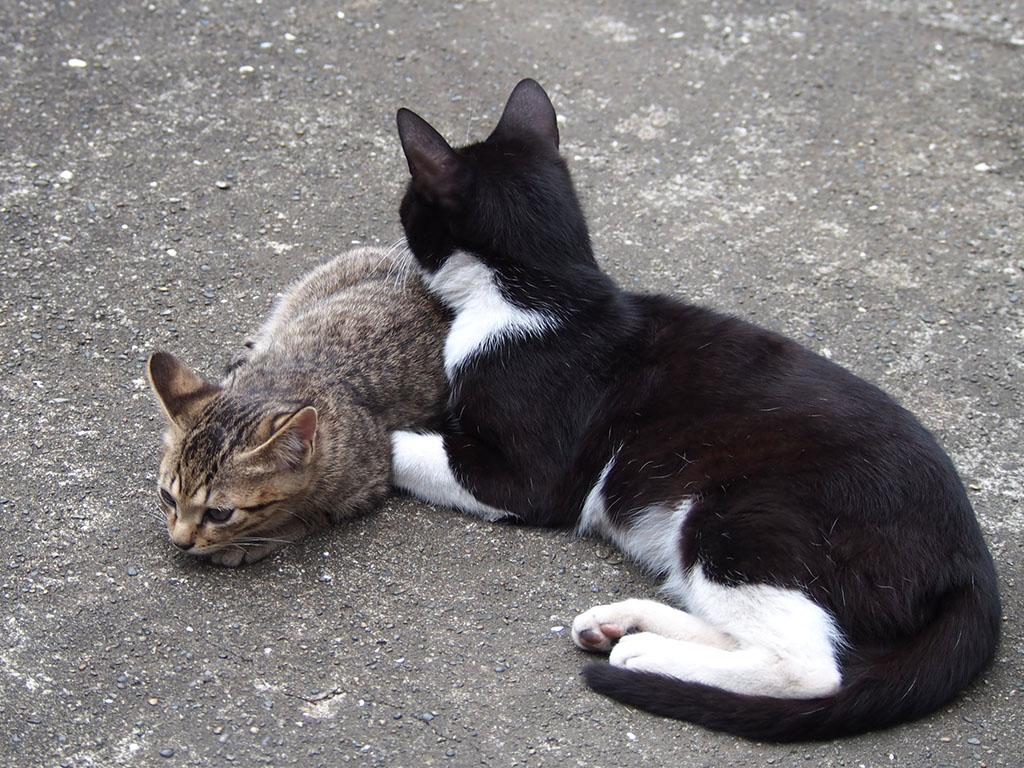 仔猫とこまち 前足封じ