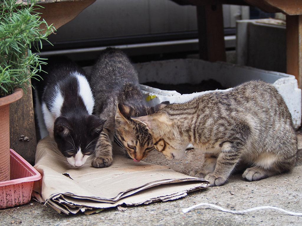 コーちゃんの子供3兄弟