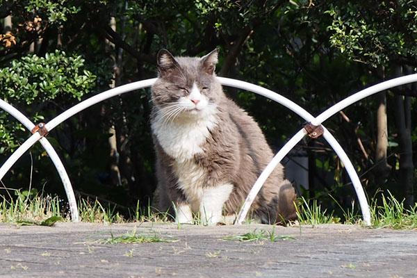 オット 別猫見ながら目を細め