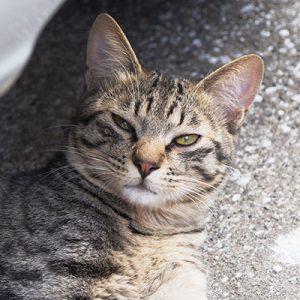 shiwawo grumpy face