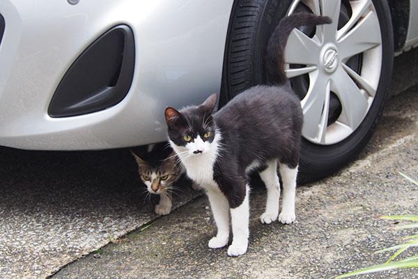 車の下からコーちゃん
