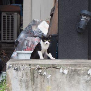 komachi watching eat place