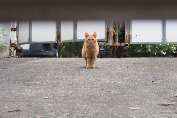 近づいて来る母猫