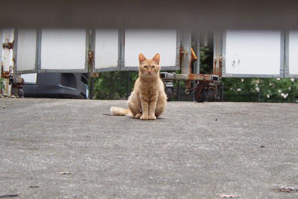 お座りした母猫