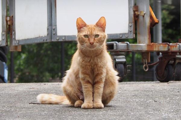 母猫ズーム 期待している顔