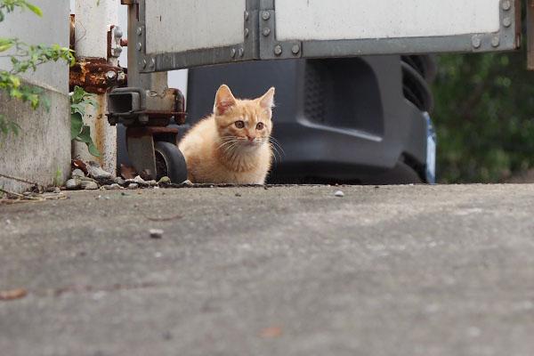 仔猫 顔出した