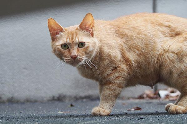 カリカリ設置 近寄って来た母猫