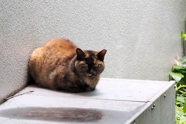 サビ猫さん 物怖じしない