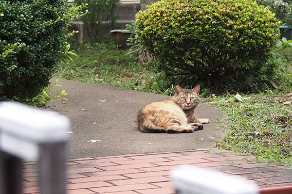 saki watching me at garden