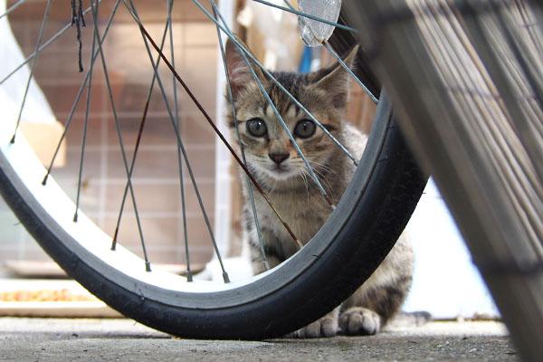 らいた 自転車越し
