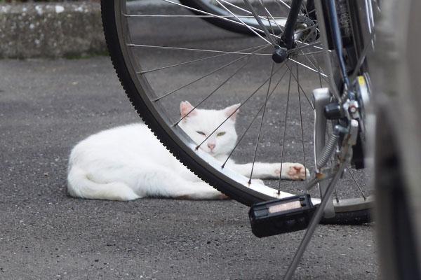 自転車越し うさぎ