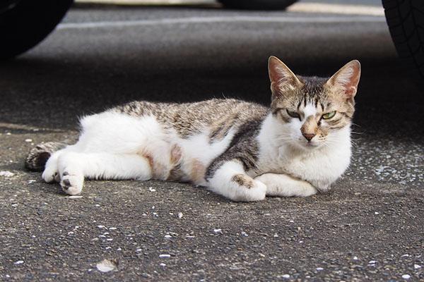 母猫コーちゃん