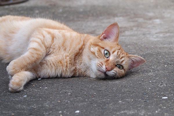 ソラ 仔猫を見てる