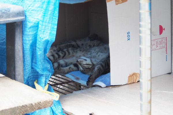 箱の中でらいたとこいた 万歳寝