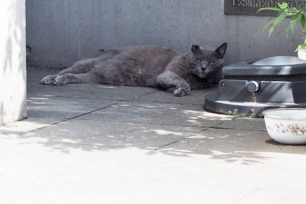 猛暑の日のロシグレ君 顔上げた
