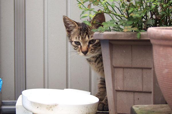 こい太 植木鉢の横 下を見てる