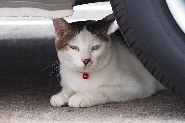 cochu grumpy face