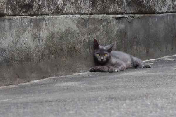 グレー仔猫 2