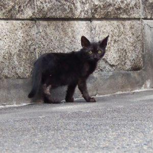 balck kitten