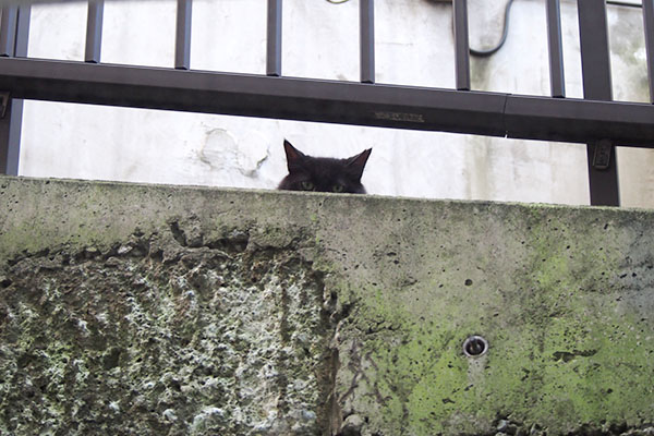 猫耳発見 モフネ
