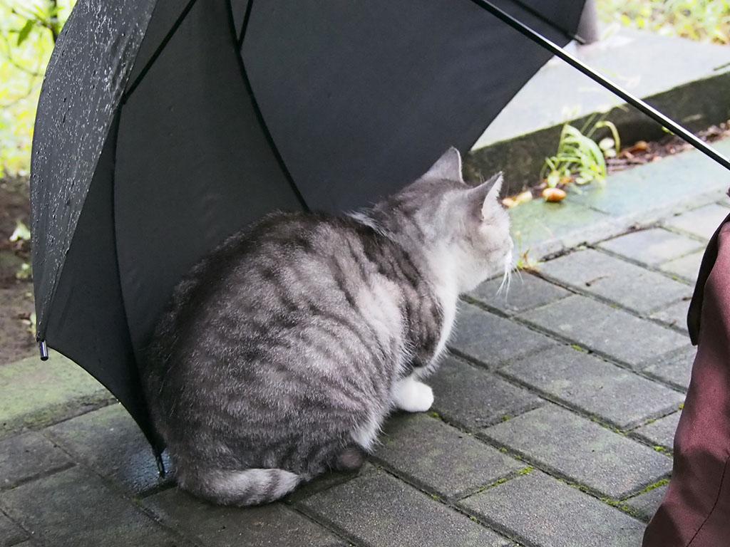chrom in the umbrella