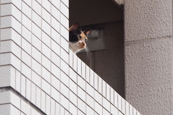 正面のビルを見る リコ