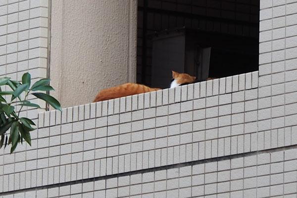 cub and riko at 2nd floor