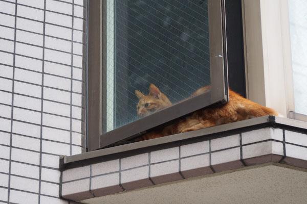窓辺の全体像 チャクラ