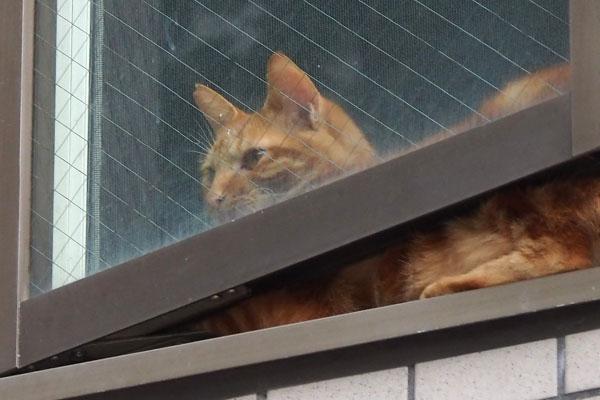 chakura at window