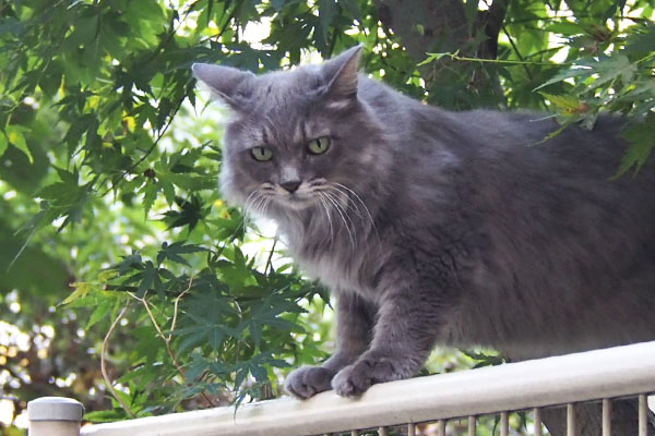 mafu on the tree and fence