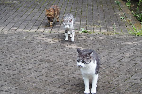 3兄弟 登場