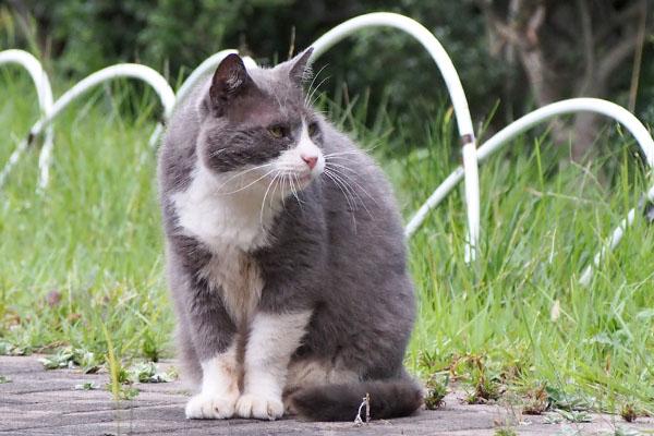 猫背なオット