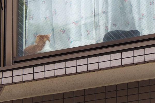 家猫さん 2匹 茶白さん起きた