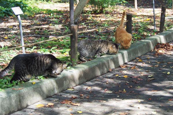 3猫でまた食べる